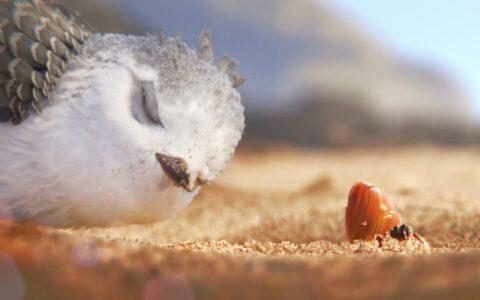 奥斯卡最佳动画短片《鹬》Piper,关于成长与独立