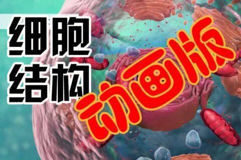 生物细胞结构简介英文动画版(中文字幕)